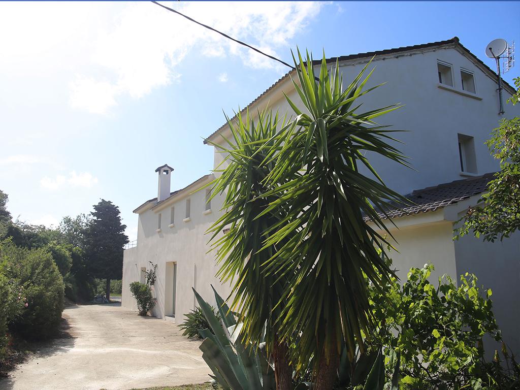 arriere-palmier-albitru