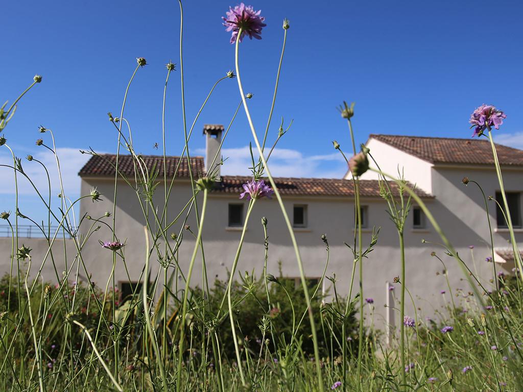 fleurs-albitru