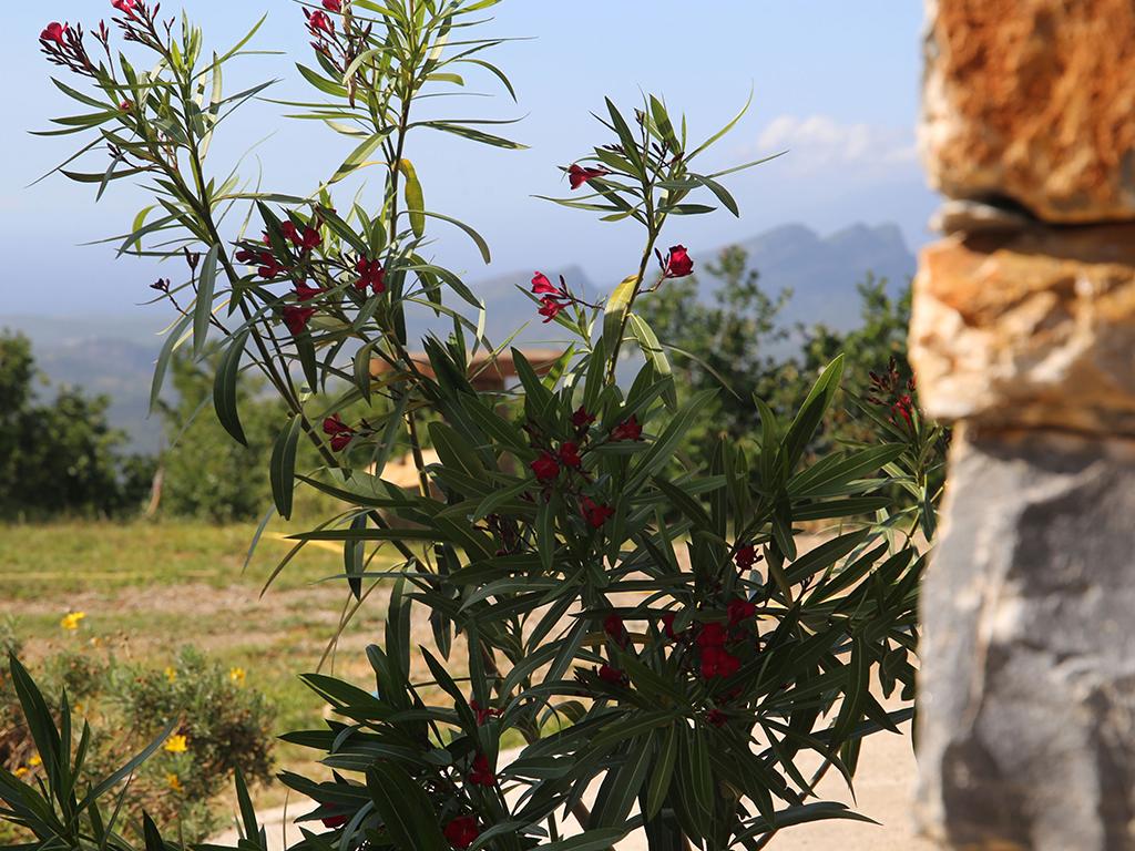 plante-albitru